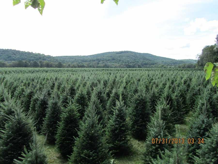 6. Glove Hollow Christmas Tree Farm in Ashland