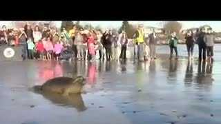 The Seacoast Science Center released a seal back to the ocean Saturday afternoon.