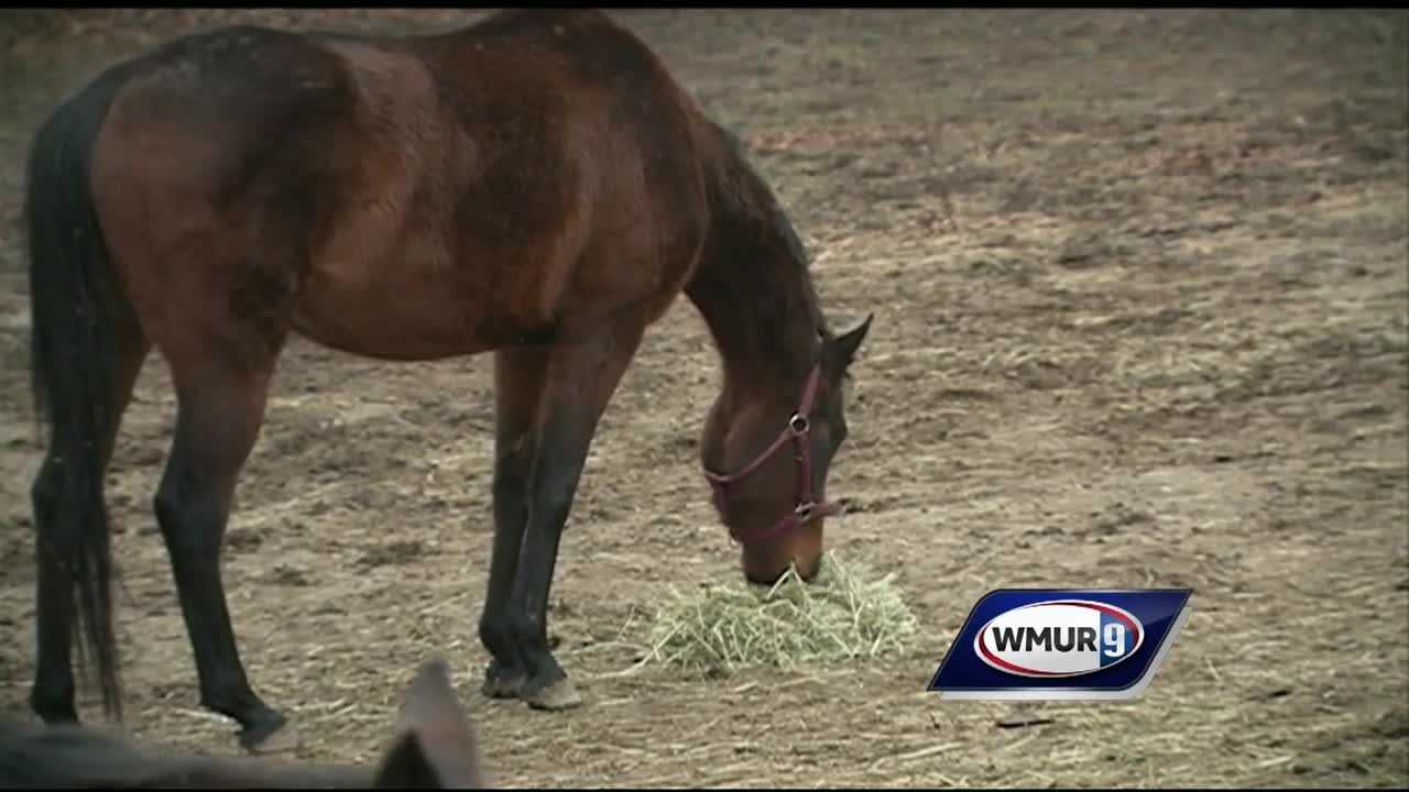 A Sandown woman whose son died unexpectedly in October has lost her animals after being charged with animal cruelty.