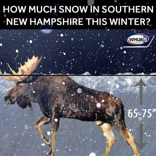 It's been a fairly mild winter so far, but that wasn't the case earlier in the year when the Granite State got slammed by storm after storm. We posted this photo on Feb. 10, showing that southern parts of the state had already seen 65 to 75 inches of snowfall, or approximately the size of an average adult moose. See more storm photos: http://www.wmur.com/weather/stormwatch/31171646