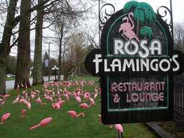 7. Rosa Flamingo's in Bethlehem
