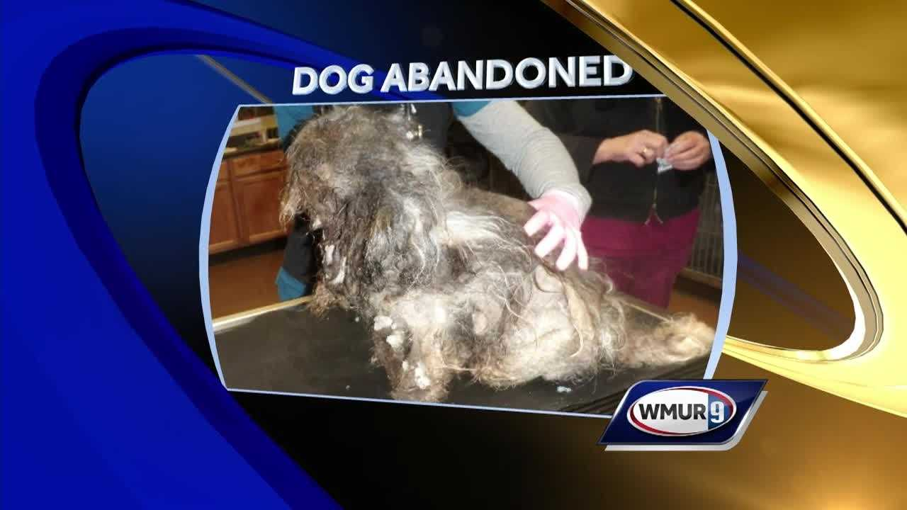 Two Londonderry women are charged with neglecting their pet dog, causing it to go deaf and blind.