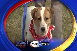 To adopt Kya contact the Cocheco Valley Humane Society: www.cvhsonline.org603-749-5322
