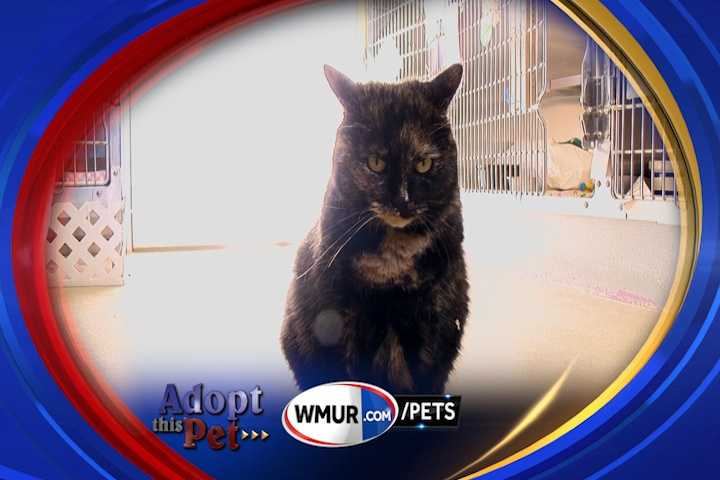 To adopt Kitty, contact the Manchester Animal Shelter: 603-628-3544&#x3B;www.ManchesterAnimalShelter.org