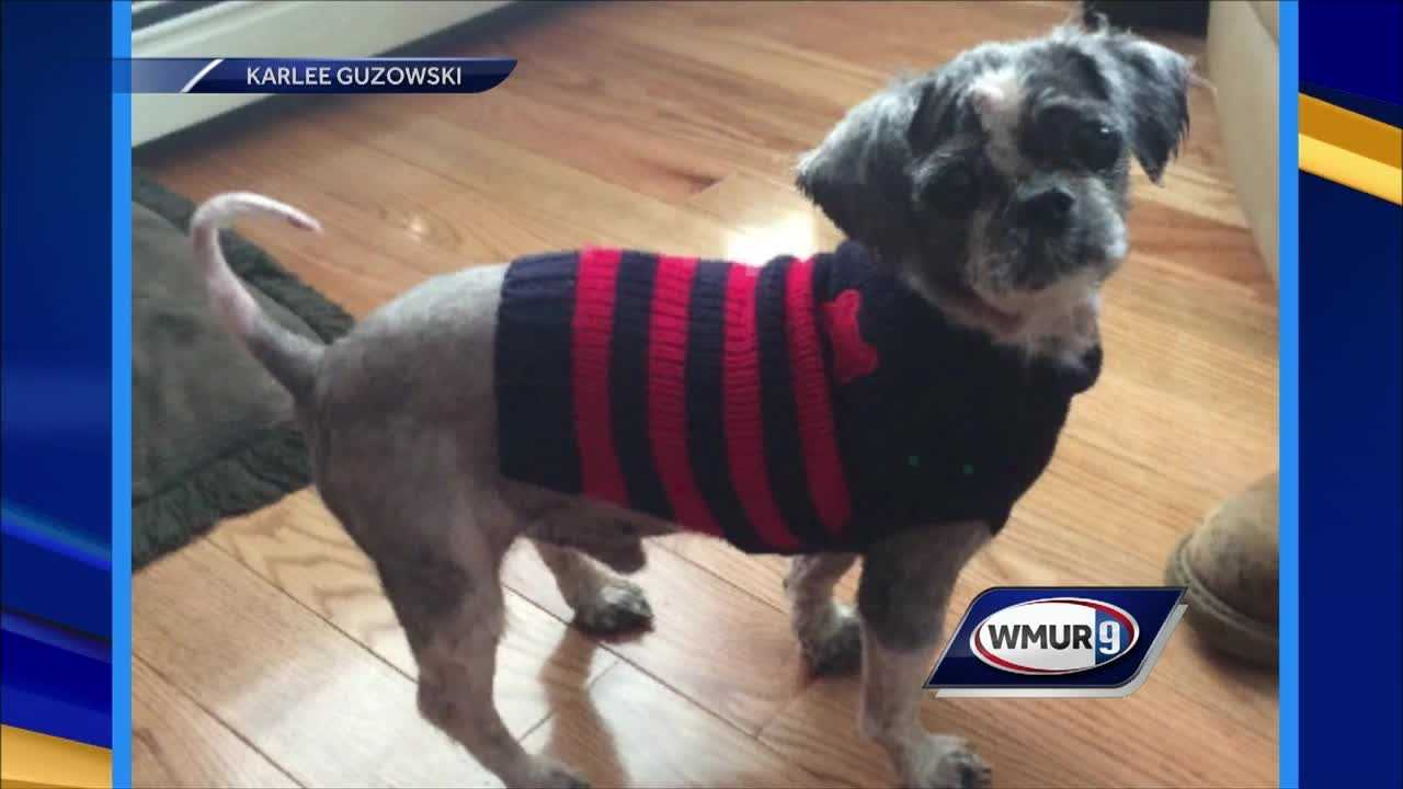 Shih Tzu Stevie was found neglected in a Londonderry apartment and now has a new home. But his new owners need help paying for the bills for cancerous tumor.