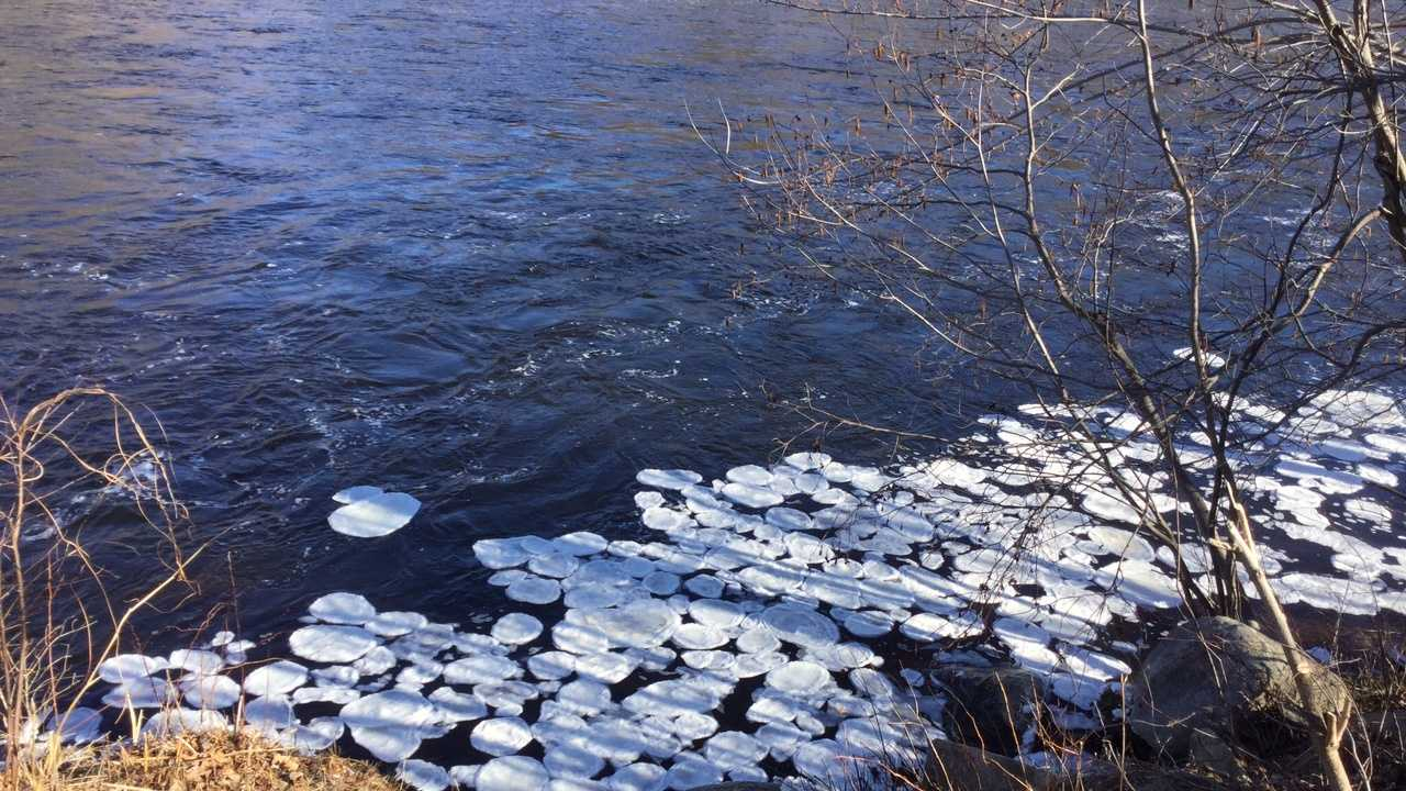 """Ice disks"" found on the Androscoggin River in Gorham, N.H."