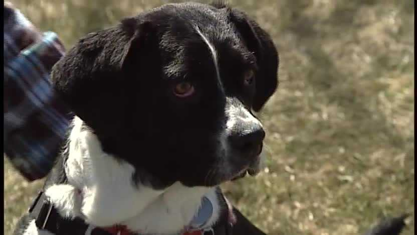 To adopt Roux, contact the Animal Rescue League of NH:http://www.rescueleague.orgPhone: 603-472-DOGS (3647)