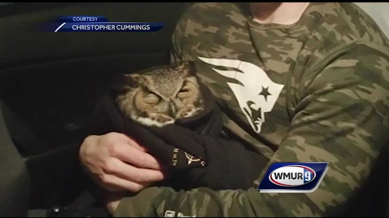 New Hampshire State Police have saved a lot of lives over the years, but one trooper may have set a new standard for helping out our fine feathered friends with a very unique rescue in Merrimack.