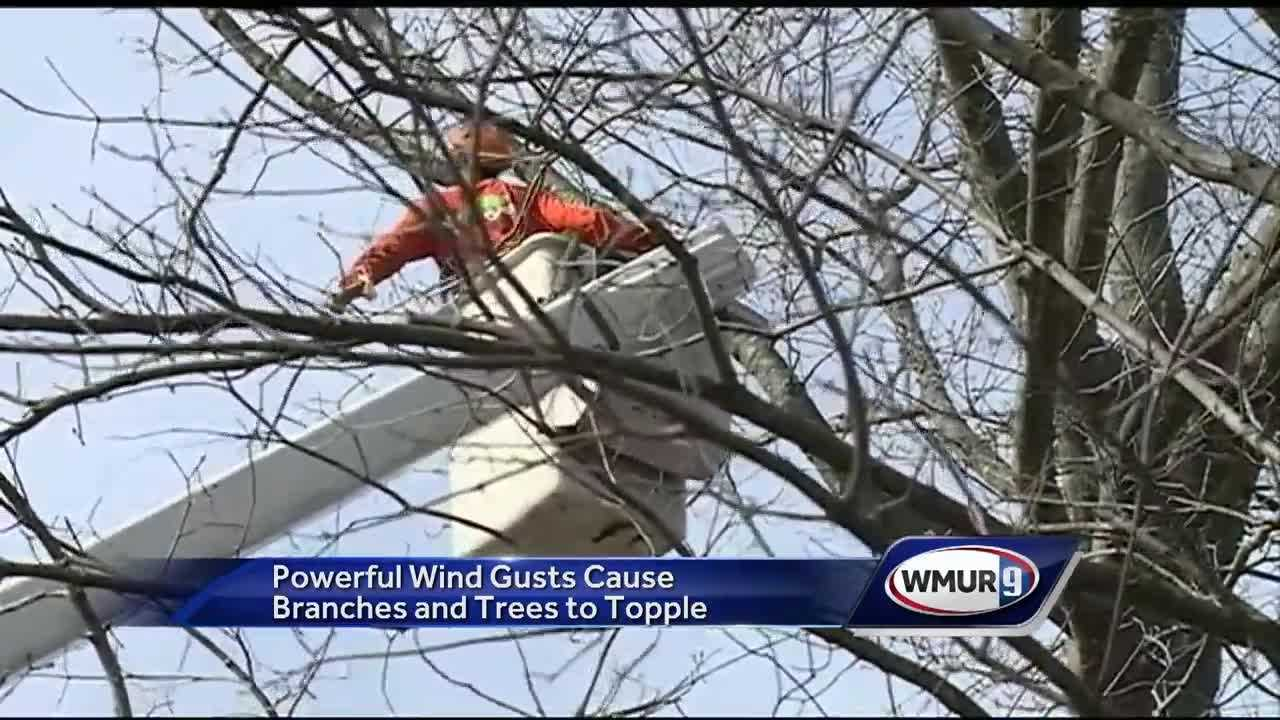 Strong winds knocked down trees and power lines Thursday in New Hampshire.