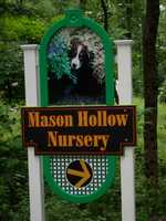 T-10. Mason Hollow Nursery in Mason