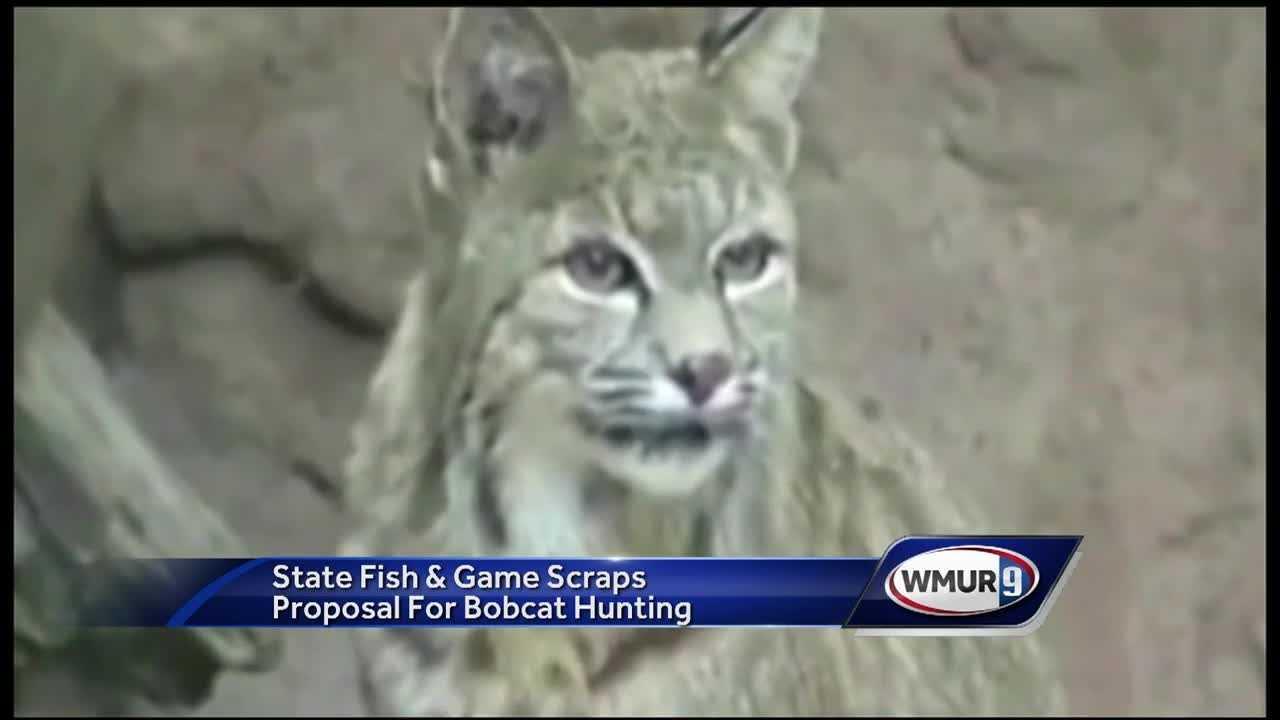 Bobcat hunt proposal scrapped