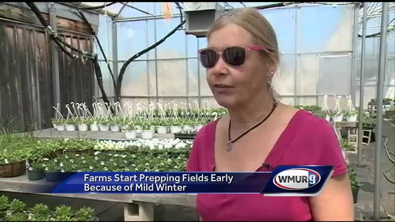Farms in the Lakes Region are off to an early start this spring because of the mild winter.