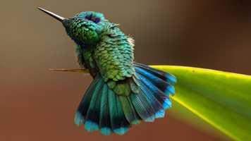 Fine Art Winner - Green Violetear by Barbara Driscoll/Audubon Photography Awards.