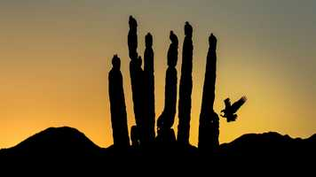 Fine Art Honorable Mention - Turkey Vulture by Blake Shaw/Audubon Photography Awards.