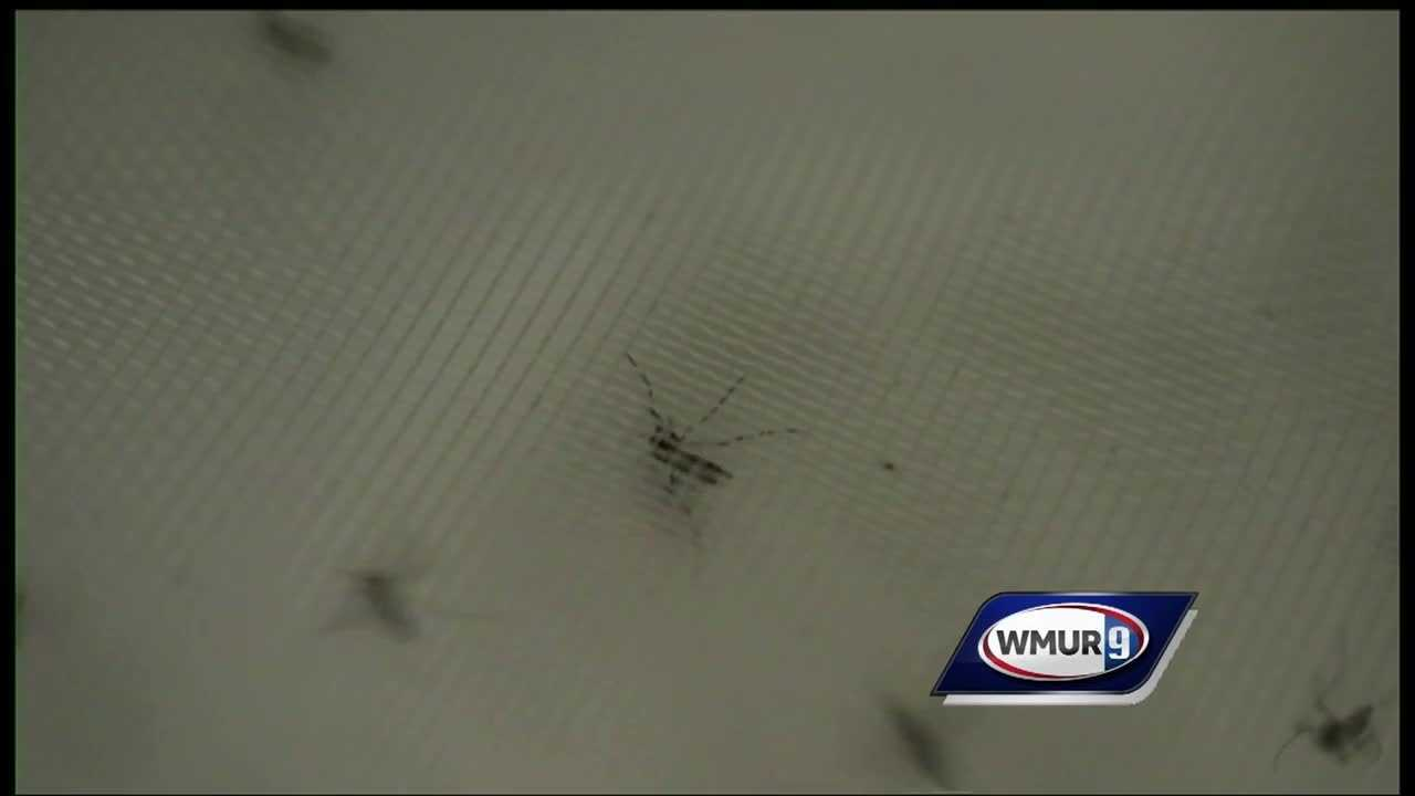 Health officials in New Hampshire said Friday they're working to make sure the Granite State gets the resources it needs to fight the Zika virus.