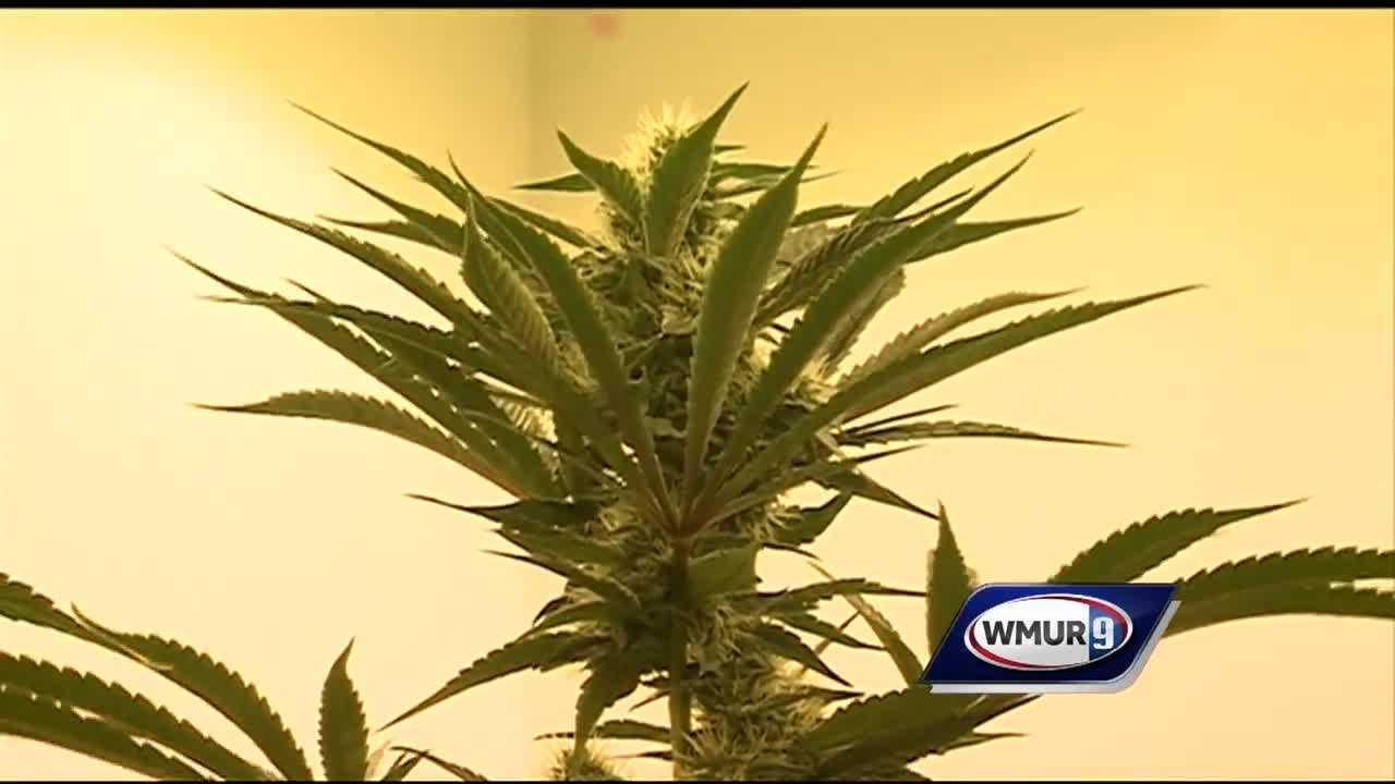 A new cultivation center is the latest facility to provide medical cannabis in New Hampshire.