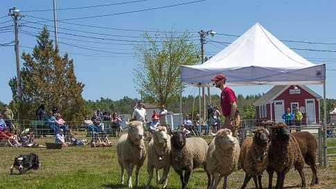 The 40th annual New Hampshire Sheep and Wool Festival took over the Deerfield Fairgrounds this weekend.