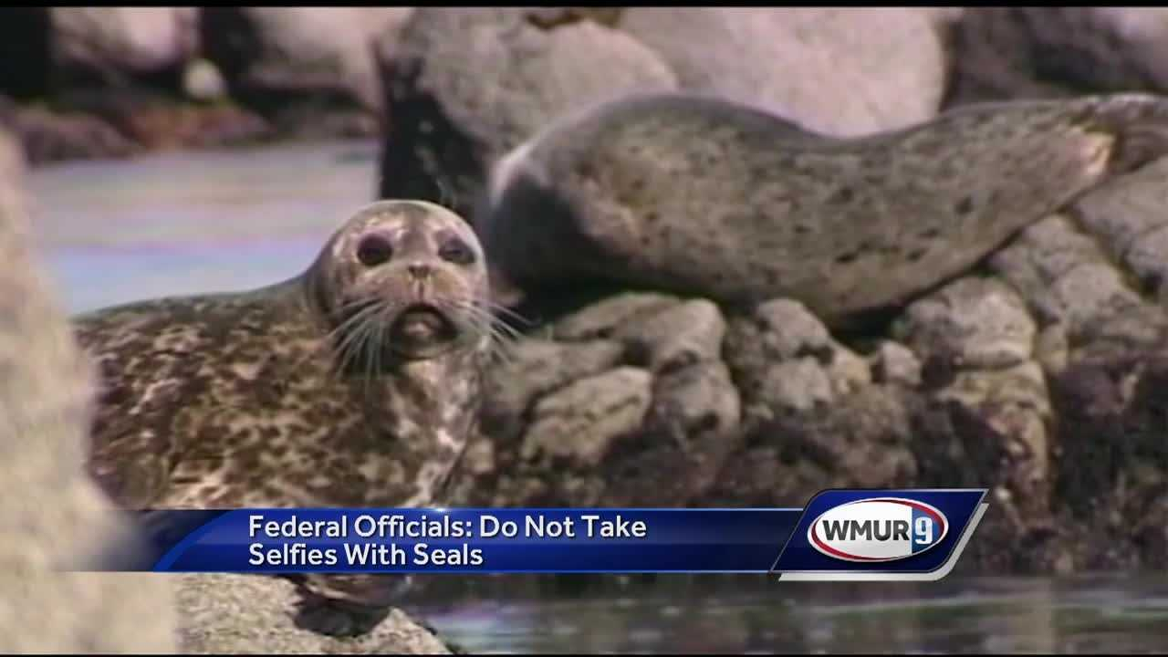 Officials are warning people not to take selfies with seals this memorial day weekend.