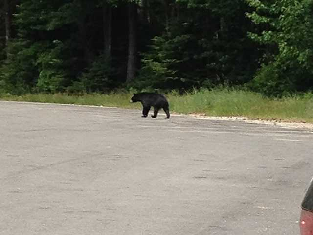 Officials have been warning residents across the state to watch out for bears.