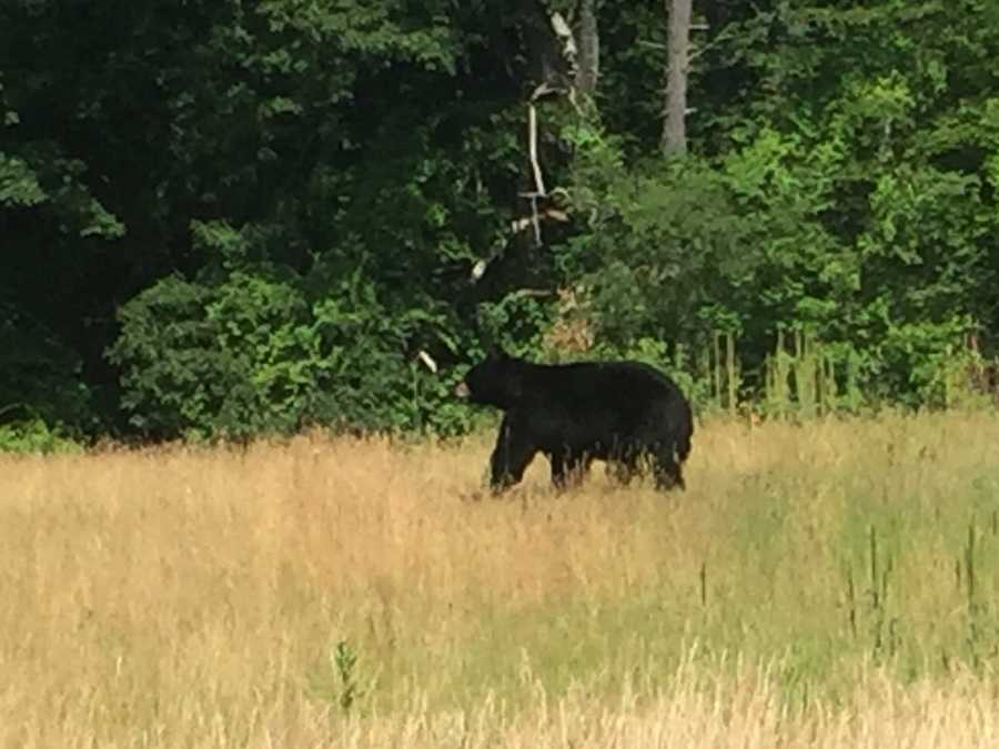 Check out who WMUR's Kristen Carosa and videographer Joel Wade spotted on the side of a road in Moultonborough!