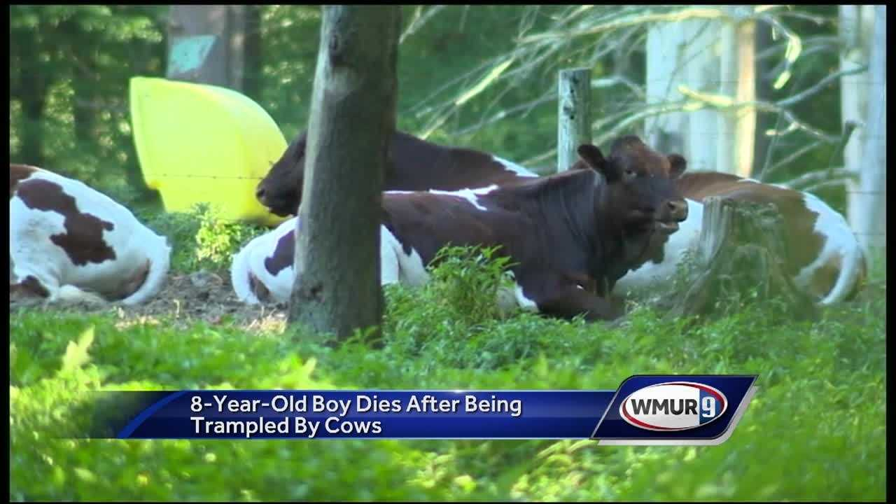 Authorities are investigating the death of a child who was trampled by a cow in Georgetown.
