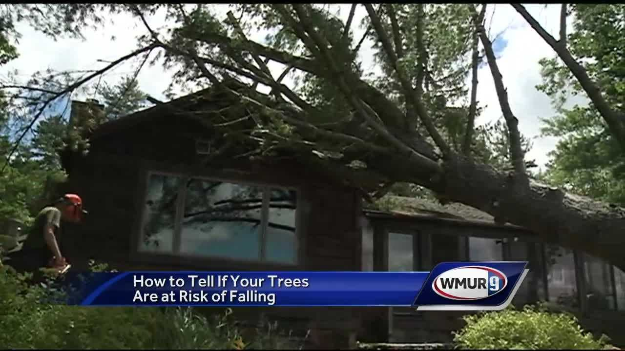 News 9 talks with a local arborist who shares advice on how to identify trees at risk for falling down.