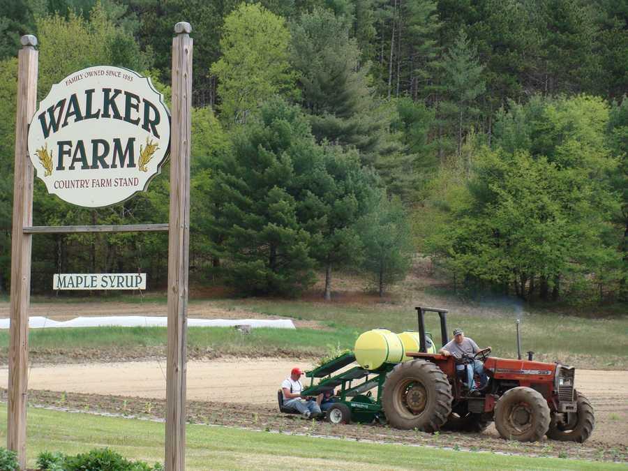 4. Walker Farm in Bristol