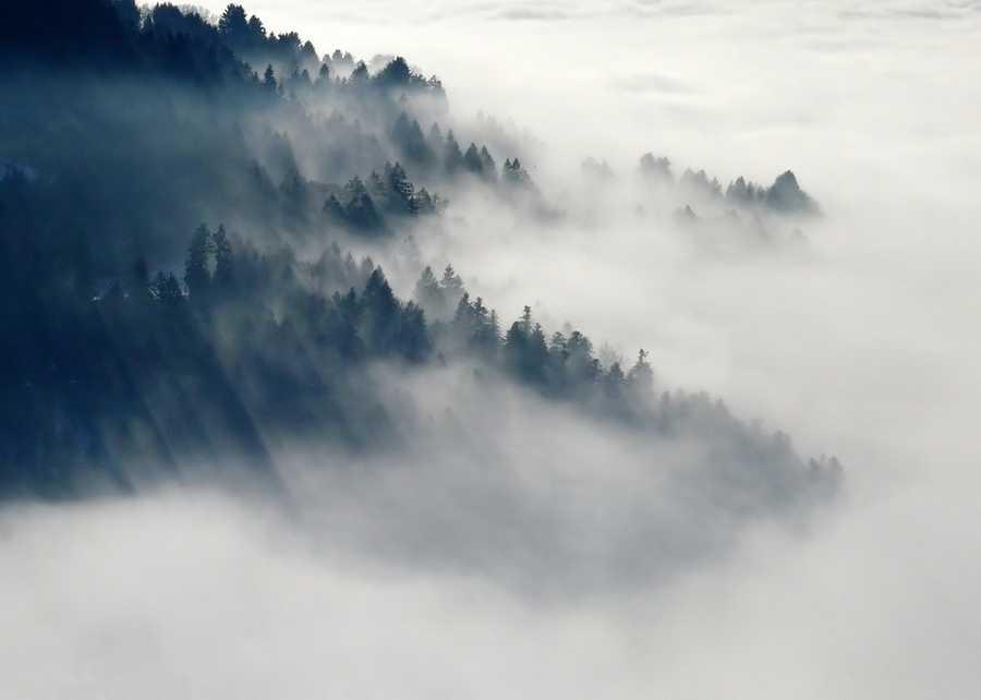 4. Fog (Homichlophobia)