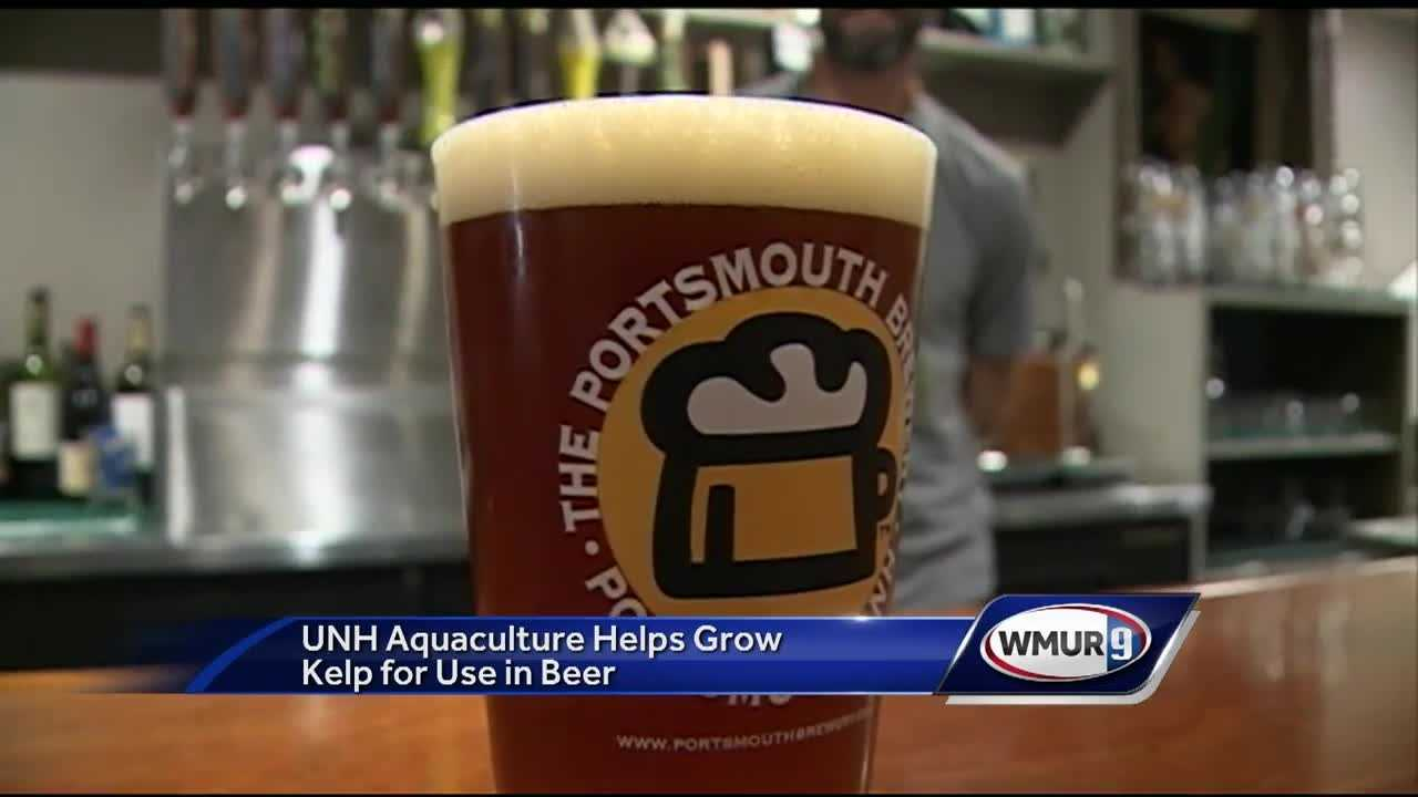 Beer brewed with seaweed is an unexpected spinoff from research being done by the University of New Hampshire aquaculture program.