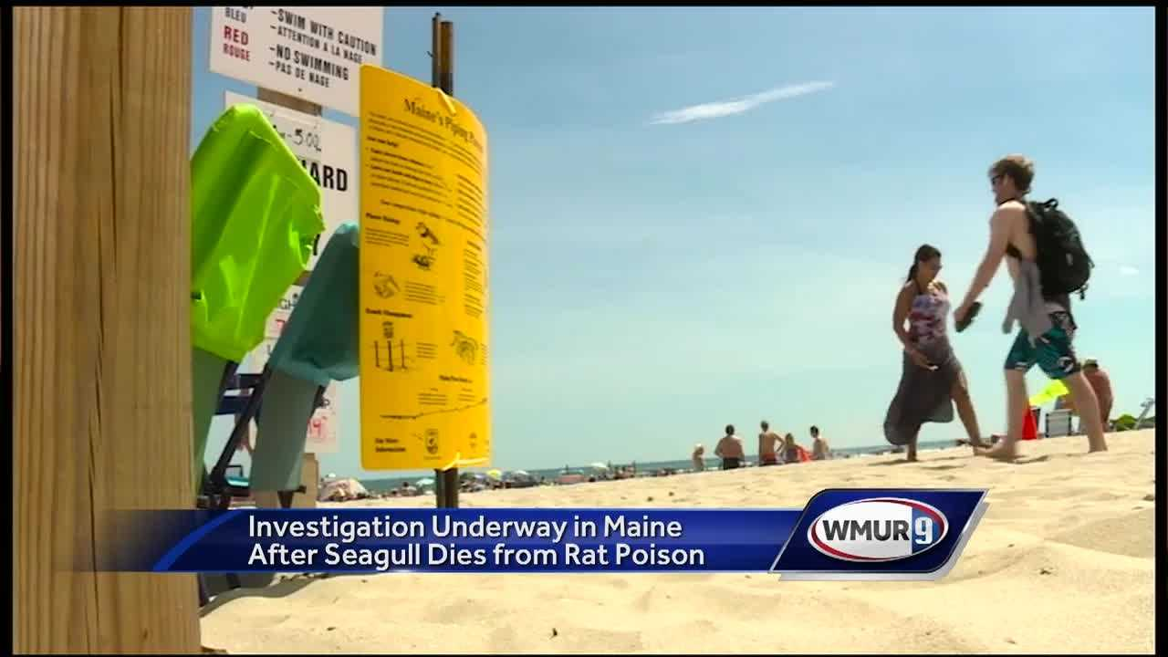 Ogunquit residents are angry after hearing reports that rat poison is being used along the town's beach.