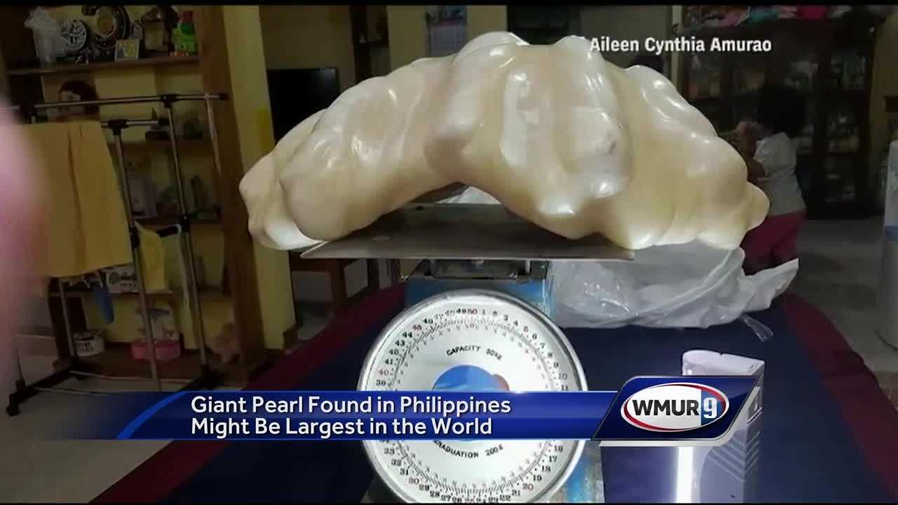 The pearl, which was found inside a massive clam, is more than two-feet long.