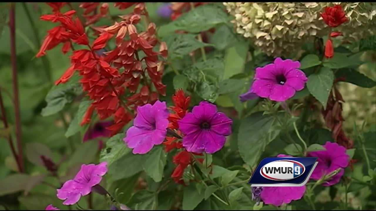 Chief Meteorologist Mike Haddad is checking out the plants at Tarbin Gardens in Franklin.