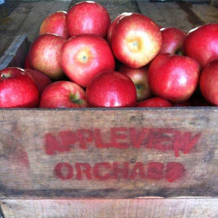 4. Appleview Orchard in Pittsfield