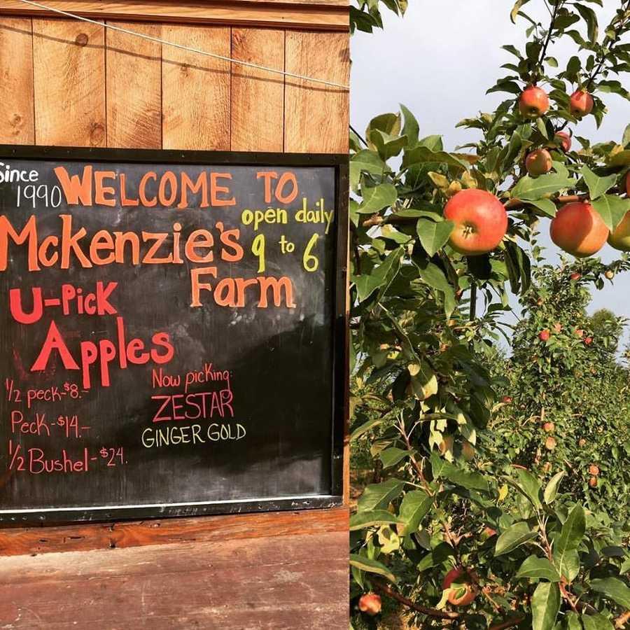 T-1. McKenzie's Farm in Milton