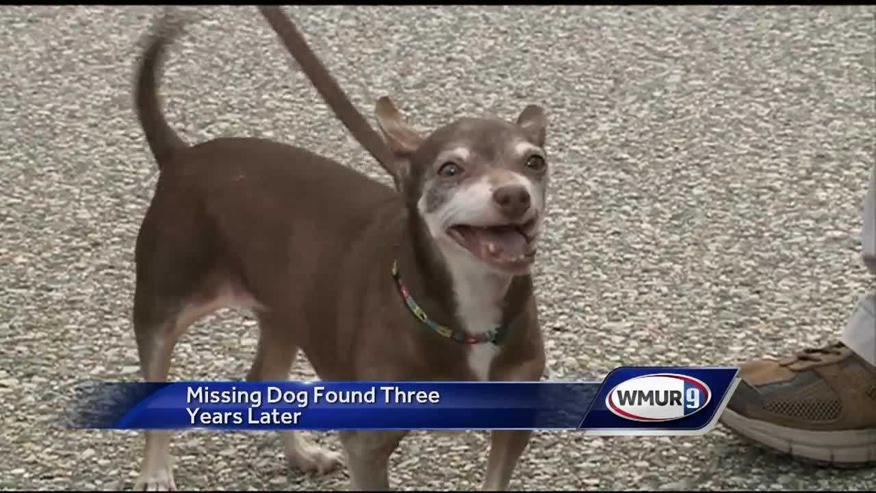 A Laconia man was reunited with his dog that was missing for three years -- thanks to a microchip.