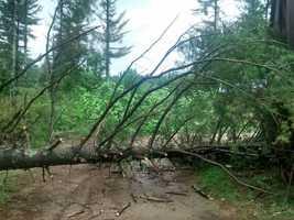 A tree down on a property in Farmington on Meaderboro Road. Courtesy - Karen Glendye Czifrik.