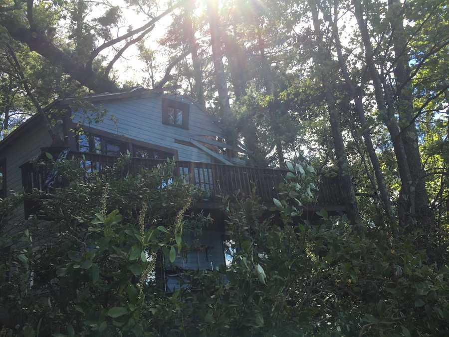A house in Barrington was damaged when an 80 ft. pine tree fell on top of it. Courtesy - Jessica Moreschi