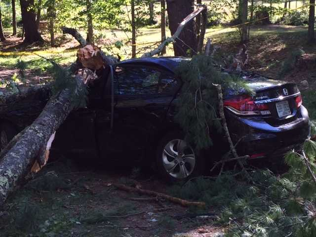 Fire officials in Epsom say a man was injured and brought to the hospital after wind blew a tree over on top of his car.