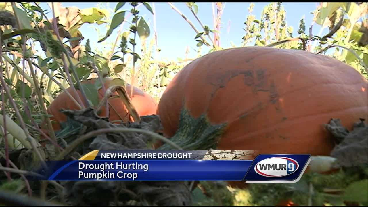 It's pumpkin-picking season in New Hampshire, but this year's drought is making it tough on farmers who provide that crop.