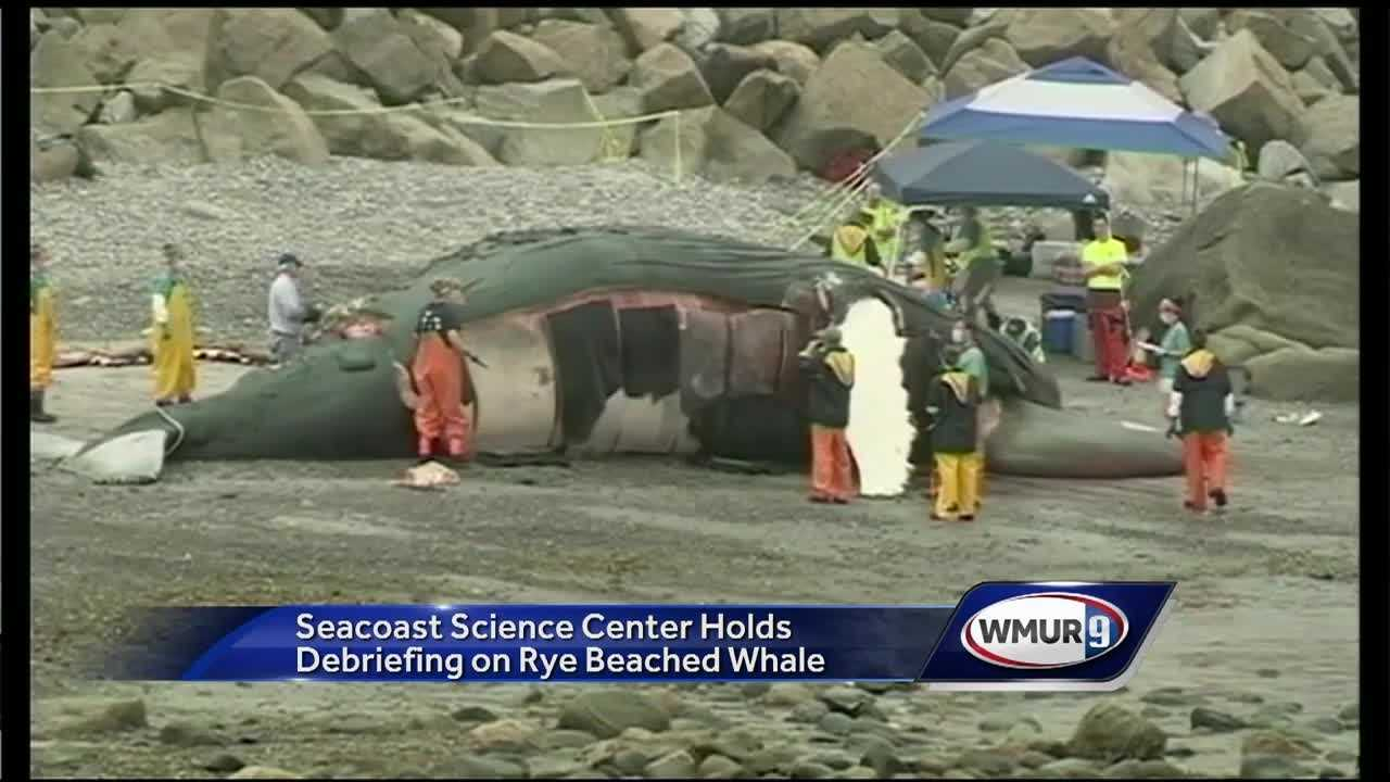 "Questions still remain in how ""Snowplow"" the whale died before washing up in Rye back in June."