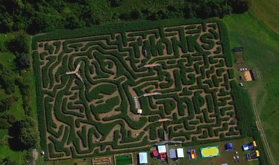 The corn maze dedicated to Big Papi was definitely corny if you don't think it was quirky.
