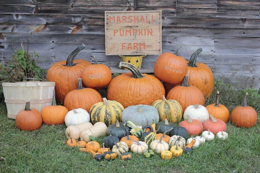 2. Marshall Pumpkin Farm in Boscawen