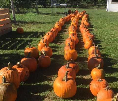 T-10. Carter Hill Orchard in Concord