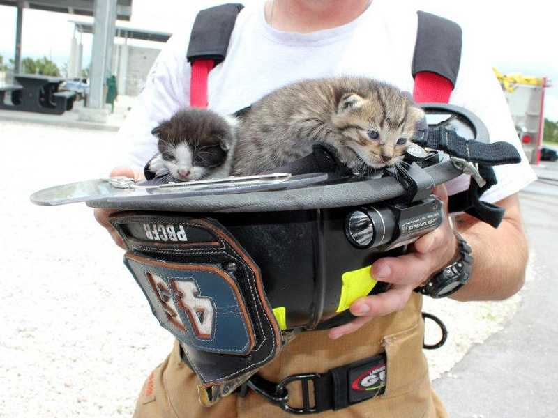 Firefighters conducting a routine training exercise Thursday came to the rescue of four kittens in a burning.