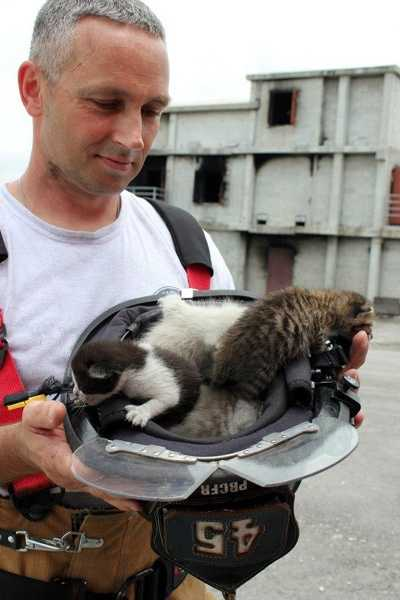 All of the kittens were adopted by firefighters who planned to take them home to their families.