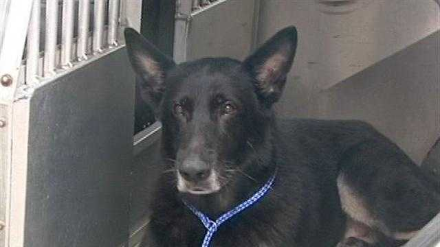 Kenzo, the K9 deputy that was shot twice, is out of the hospital and expected to make a full recovery.