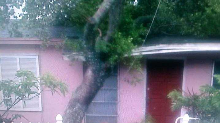 This tree fell on a house in Lake Worth.