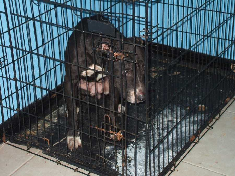 Police found two dogs confined to a closed bedroom -- one in a wire crate and another in a plastic airline kennel.
