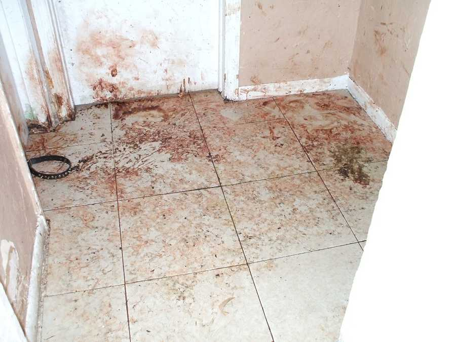 Police said there was feces and urine throughout the home, and the dogs were left without any food or water. Police said there was also blood smeared on the walls.