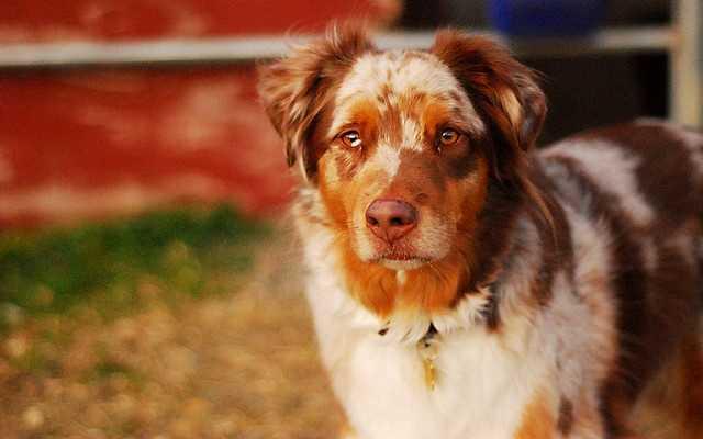 4. Maggie (losgofres/flickr)